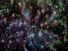 blow up 261 - subatomic decay patterns and the Trifid Nebula