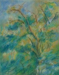 Study of a Tree Canopy  Studie einen Baumkrone