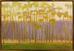 Southern Trees in a Light Filled Space
