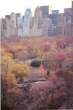 Muted Autumn