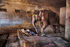 Elephant with Sleeping People