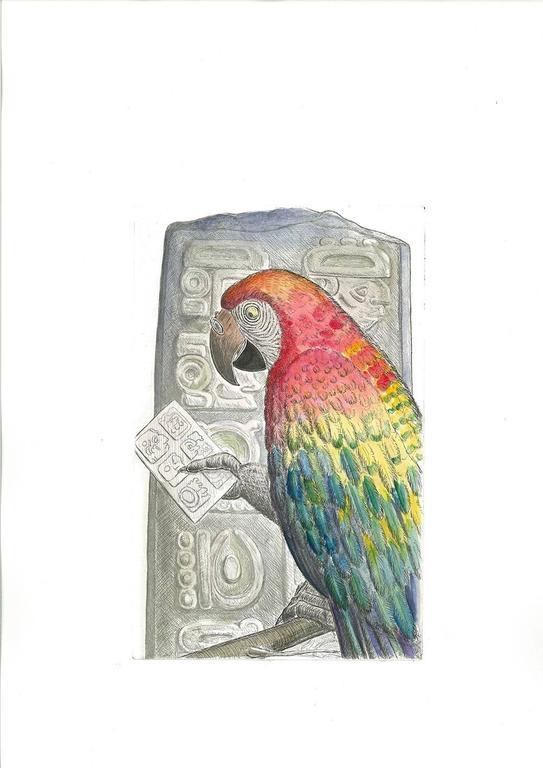 Scarlet Macaw, Honduras