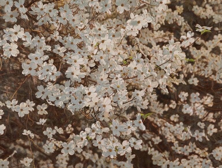 Jeffrey Vaughn - Dogwood Blossoms 1