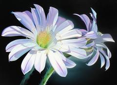 """Lean In, Pale Echinopsis"""