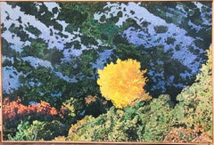 Sunlight Cottonwood,desert landscape painting,canvas,yellow, blue,green,Santa Fe