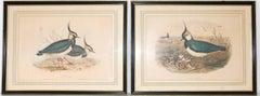 Pair of John Gould Birds Lithographs
