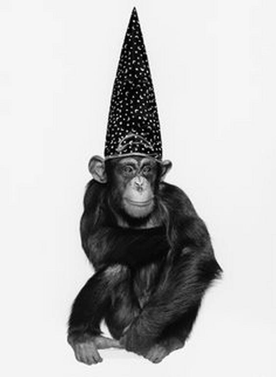 Monkey Series - Monkey with Hut