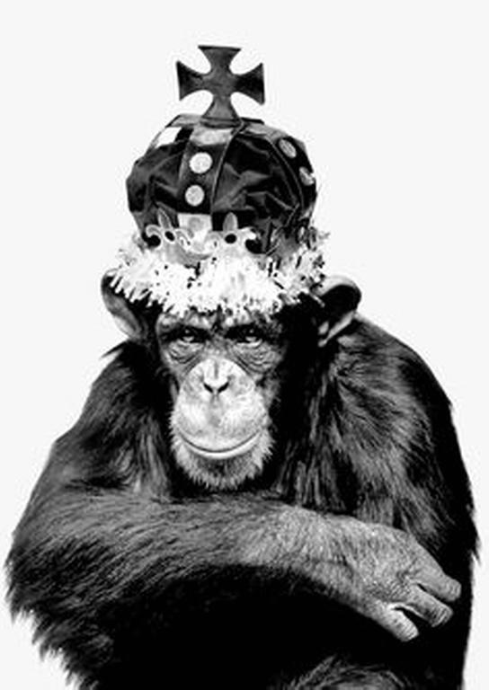 Monkey Series - Monkey King