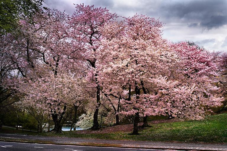 David Drebin - Pink Parkway 1