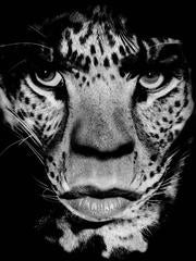 Mick Jagger (Leopard)