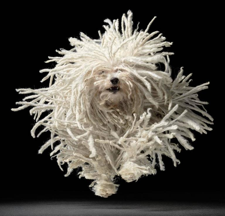 Tim Flach Color Photograph - Flying Mop