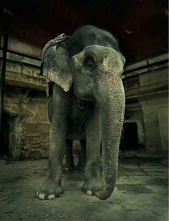 Andreas H. Bitesnich Color Photograph - Elephant at Ambert Fort