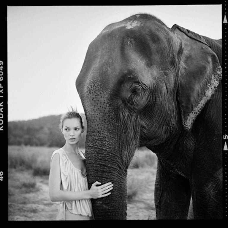 Kate Moss in Nepal II - portrait of the supermodel standing next to an elephant in Nepal, South Asia – for animal and travel lovers. The artwork is signed and made by the artist in an strictly limited edition of 30. Other sizes on request. PREISS
