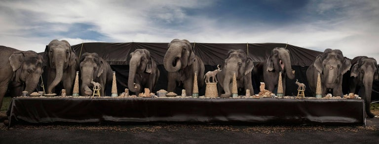The Elephant Feast
