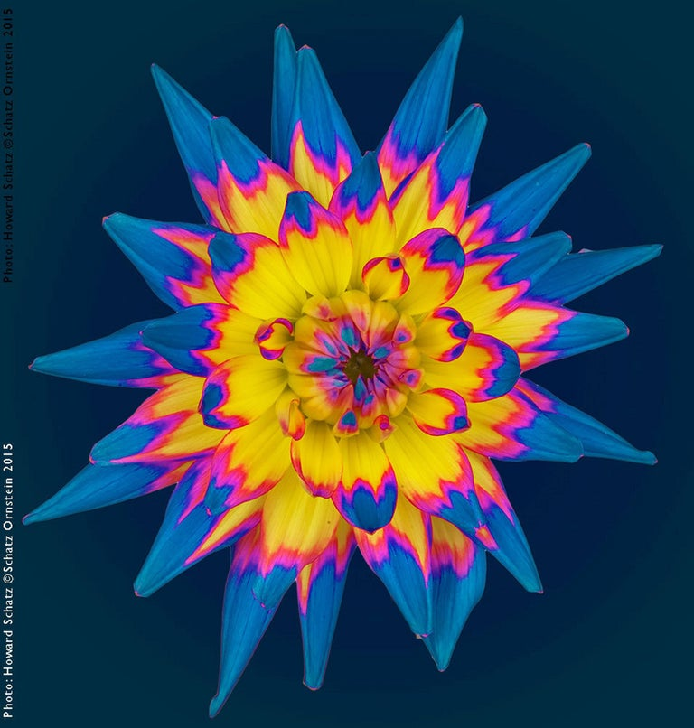 Howard Schatz Color Photograph - Botanic II