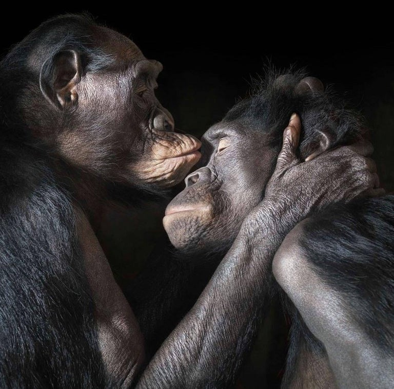 Tim Flach Color Photograph - Monkey Kiss