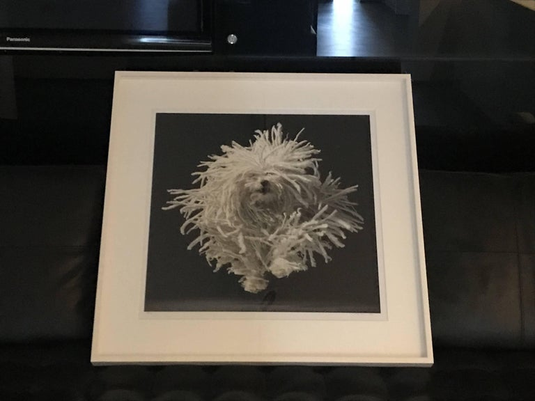 Flying Mop - Photograph by Tim Flach