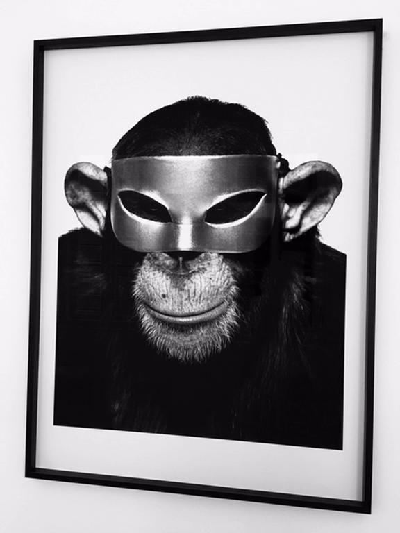 Monkey with Mask - animal portrait of a chimp with mask.  For Sale 1
