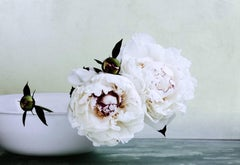 Peonies Three, Two White Flowers with Green Buds in White Bowl, Gray Background