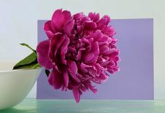 Peonies 10a