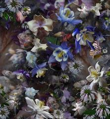 Columbine: The Mystery of Five Doves, Layered Images of Flowers in Violet Blue