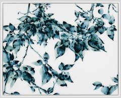Hungry Teal, Botanical Painting on White DuraLar in Shades of Teal