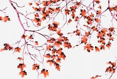 Hot Chimera, Botanical Tree Painting on Mylar with Red Leaves and Pink Branches