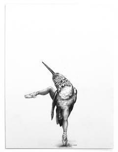 Ballerina Hummingbird