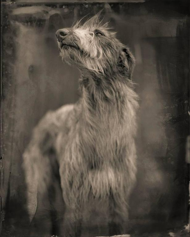 <i>Bog Dog</i>, 2014, by Keith Carter