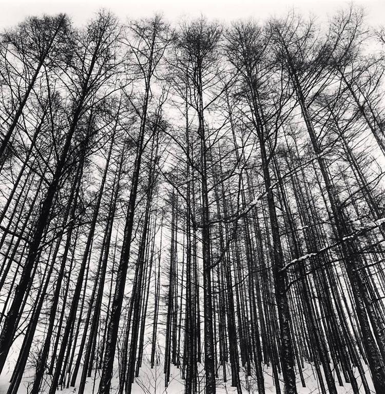 Michael Kenna Landscape Photograph - Karamatsu Forest, Biei, Hokkaido, Japan