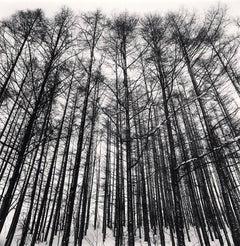 Karamatsu Forest, Biei, Hokkaido, Japan