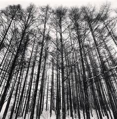 Michael Kenna - Karamatsu Forest, Biei, Hokkaido, Japan