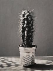 Chema Madoz - Cactus, Madrid, 1995