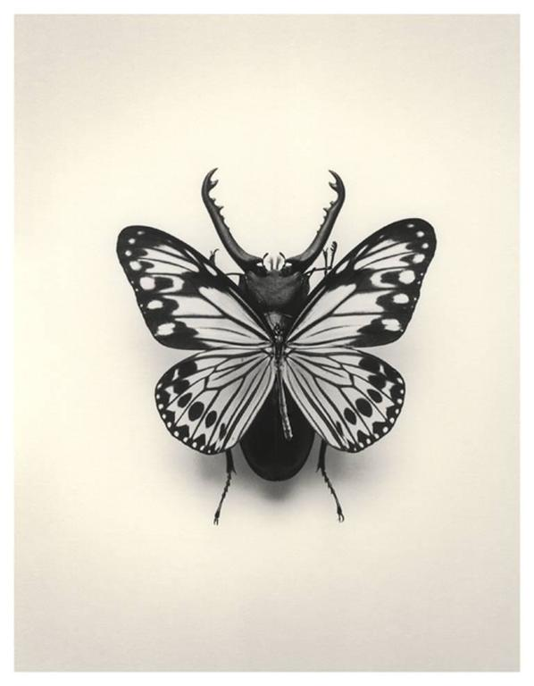 3df2adad356a Chema Madoz - Untitled (Butterfly   Bug)