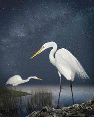 Great Egrets, A Starry Night