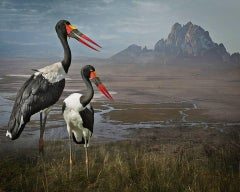 Saddle-Billed Storks