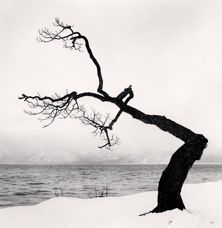 Kussharo Lake Tree, Study 15, Kotan, Hokkaido, Japan