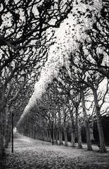 Jardin des Plantes, Study 1, Paris, France