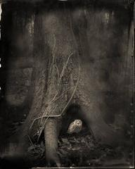 Tree Roots, from Ghostland