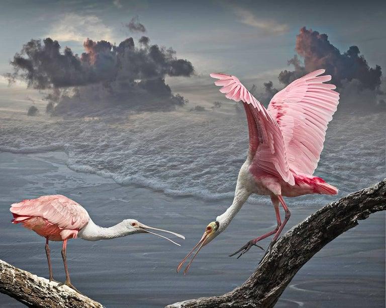 Cheryl Medow Color Photograph - Roseate Spoonbills