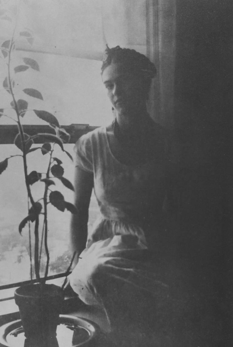 Frida by the Window, Detroit, MI