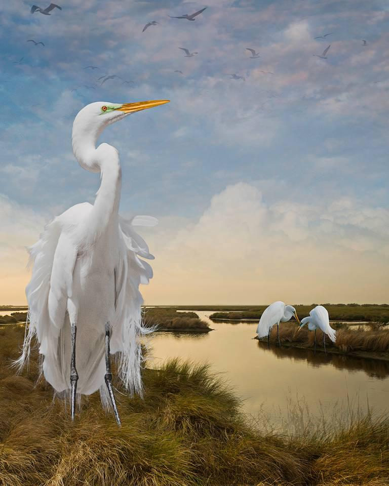 Cheryl Medow Color Photograph - Great Egrets in the Bayou
