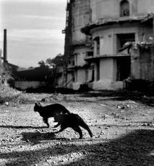 Kladno (Cats)
