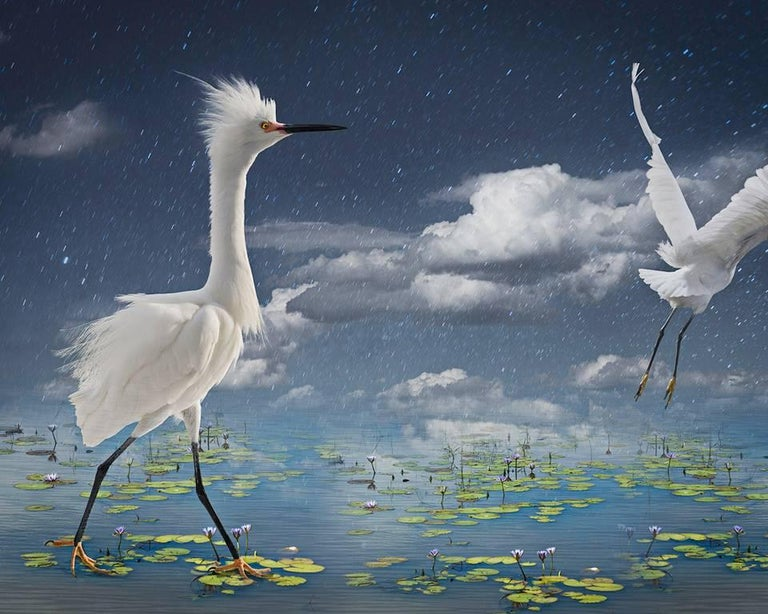 Cheryl Medow Figurative Photograph - Snowys and Lily Pads