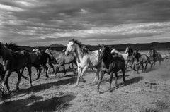 Spanish Ranch Remuda, Tuscarora, Nevada