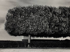 Michael Kenna - Windy Trees, Les Tuileries, Paris, France
