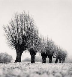 Seven Pollarded Trees, Capaize, Bourgogne, France