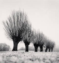 Seven Pollarded Trees, Capaize, Bourgogne, France