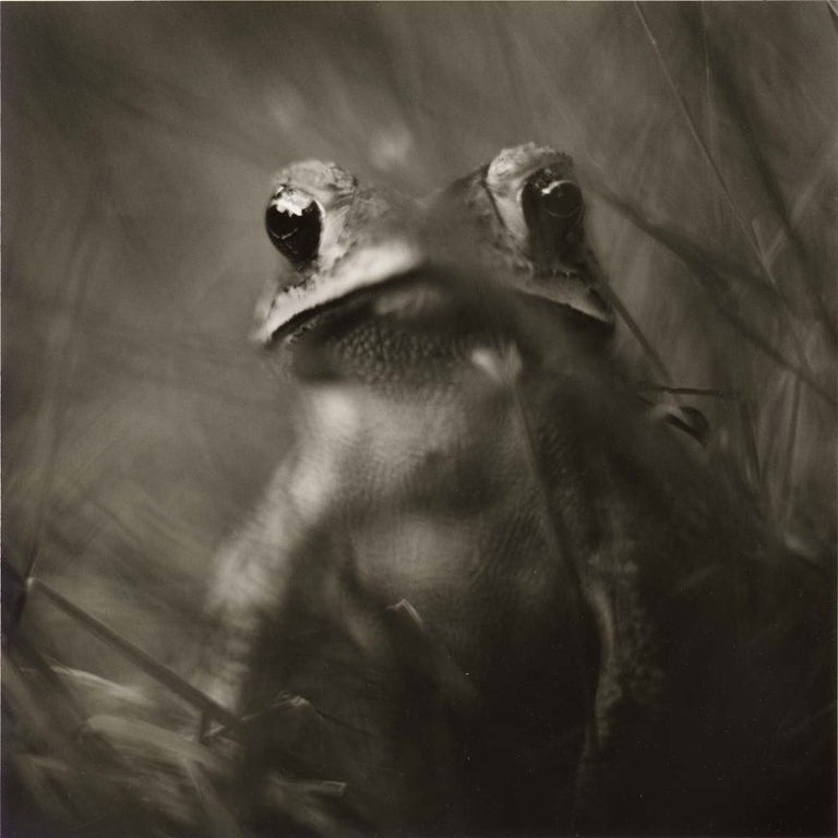 Edition of 15 Signed, titled, dated, numbered and print type. Platinum Palladium Print Series: Terrestrials  While integrating photography and his passion for gardening, David Johndrow discovered within his own garden, a small-scale world of