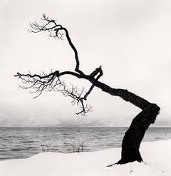 Michael Kenna - Kussharo Lake Tree, Study 15, Kotan, Hokkaido, Japan
